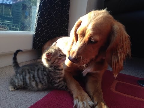 The Cutest Puppy and Kitten Friendship * Watch in HD*