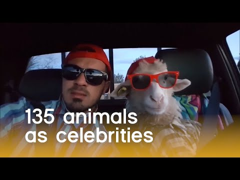 135 Animals As Celebrities (Animal Pet Puns) | The Pet Collective