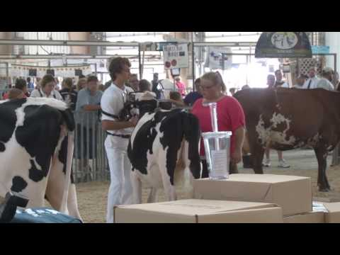 Dairy Cattle Fitting and Showing Contest 2016