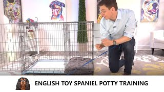 English Toy Spaniel Potty Training from WorldFamous Dog Trainer Zak George  Toy Spaniel Puppy
