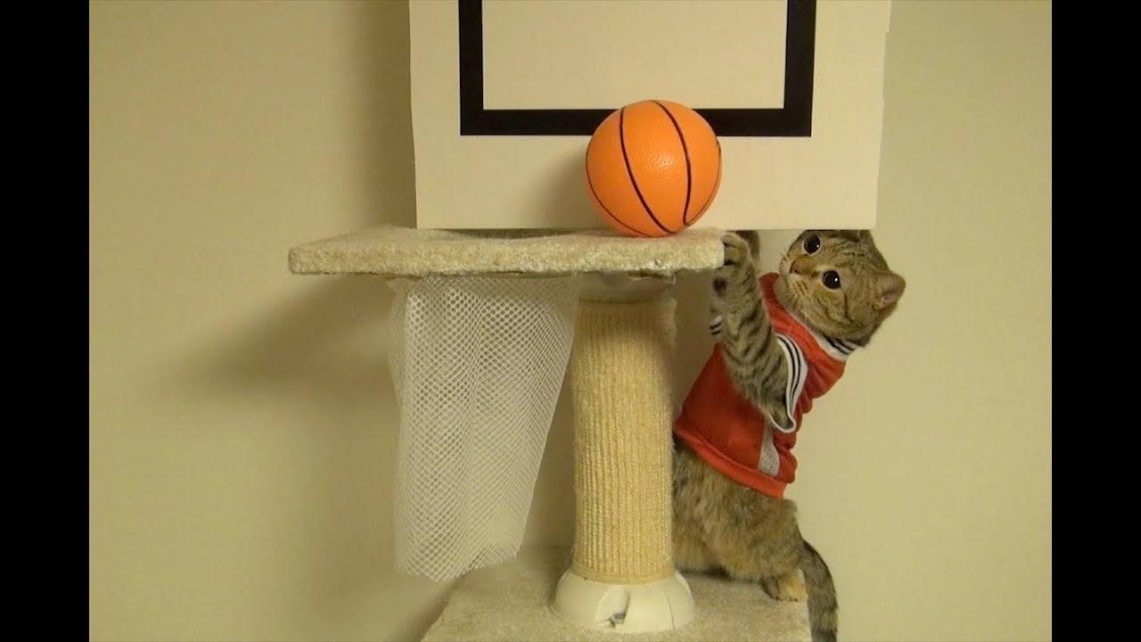 Cat Basketball Gif