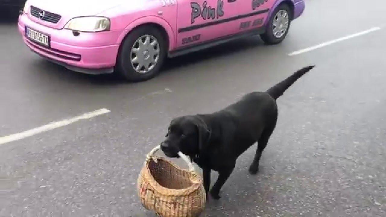 Dog Carrying Basket Bag