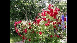 Обзор моего сада/18 июля
