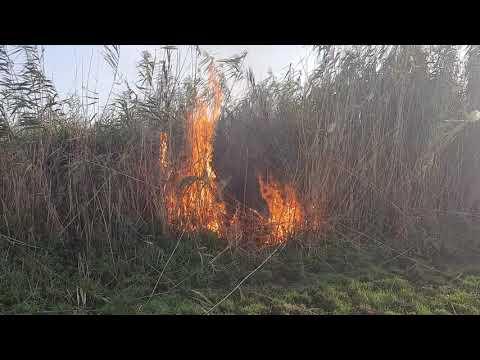 В селе Ивановка горит камыш - привью к видео GKRD9G5fMpk