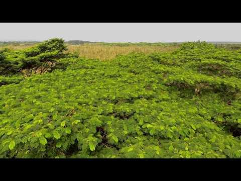 Windy Rainforest Canopy - Keaau Hawaii - Autel Robotics Evo Drone