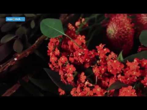 Цветочный этикет  какие цветы дарить мужчинам