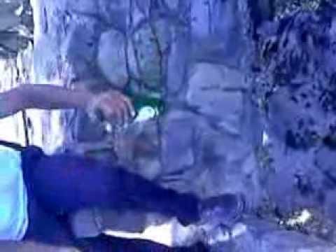 recopilacios 1 kebrando botellas con las manos x danni palaxioz productions