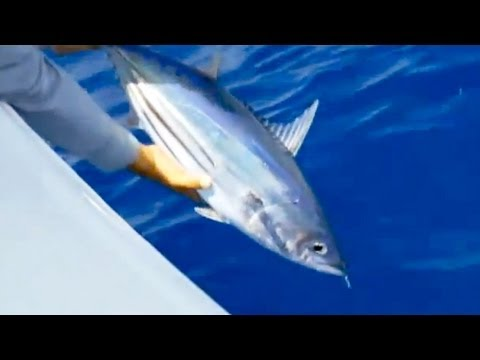 "Saltwater Experience: ""Butterfly Jigging for Tuna"" Season 3 