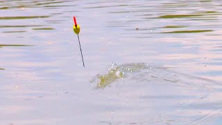Рыбалка на удочку на большой реке Ловля в проводку на поплавочную удочку