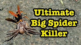 Ultimate Big Spider Killer Spider Wasp & St Lukes Train Show 2014 Dates