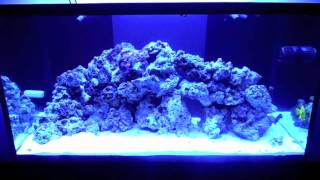 120 Gallon Saltwater Tank #4 (clean Up Crew And Tangs)