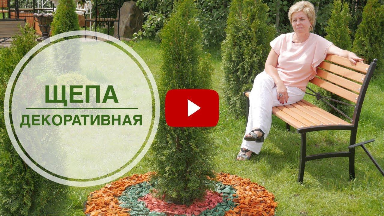Недорого купить садовый геотекстиль 1,6x50 м геосад-60 с доставкой на дом. Низкие цены в каталоге укрывной материал интернет магазина бауцентр.