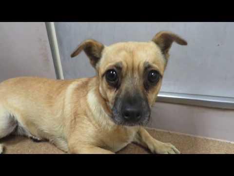 Adopt Yoko! Little Scared Shelter Dog 1 year