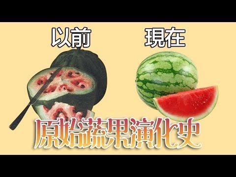 人類育種前的原始蔬果原來長這樣!中文字幕