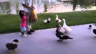 video 2012 08 24 20 00 12