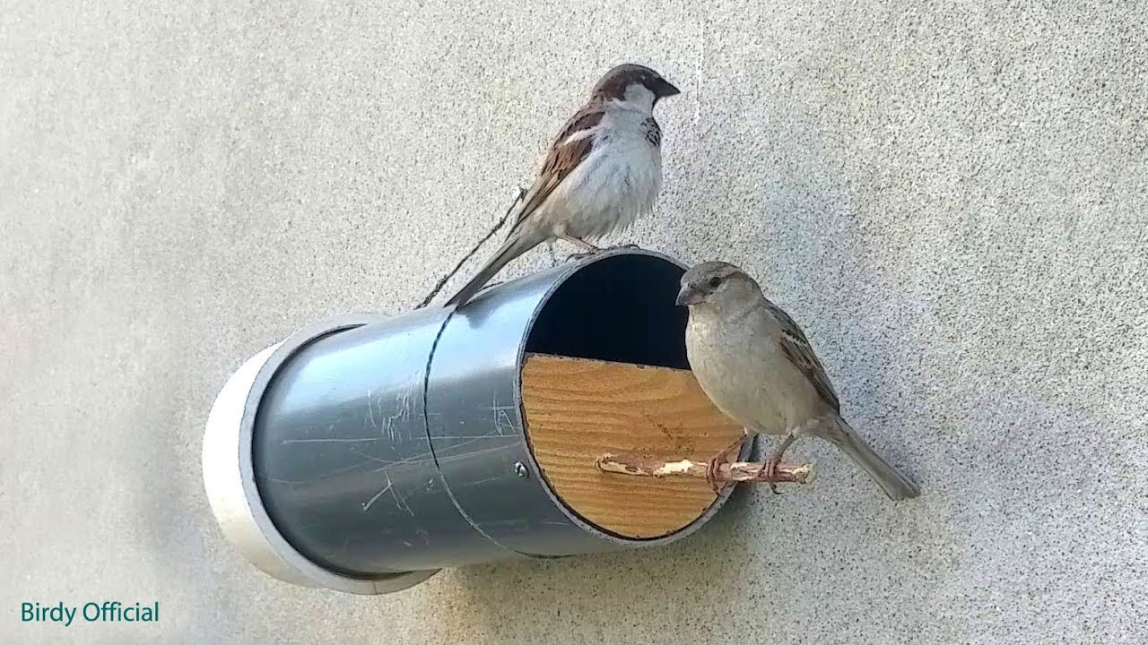 Bird house - How To Build A DIY Birdhouse Using PVC Pipe on sparrow computer designs, sparrow art designs, sparrow control,