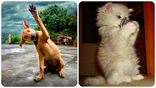 Прикольные Животные! Забавная Видео Подборка / Funny Animals 2016/