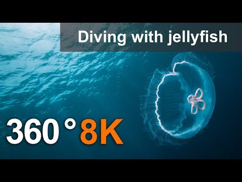 Thumbnail: 360°, Diving with jellyfish, 8K underwater video