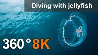 360°, Diving with jellyfish, 8K underwater video thumbnail
