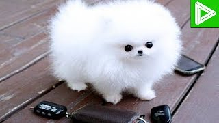 Top 10 Most Famous Dogs in History