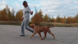 бурят-монгольская собака, Рус Кайлас Басаган 4 мес.