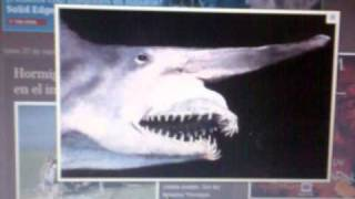tiburon duende prehistorico.3gp