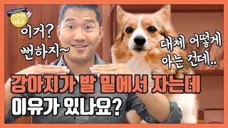 강아지가 발 밑에서 자는데 이유가 있나요?|강형욱의 소소한 Q&A