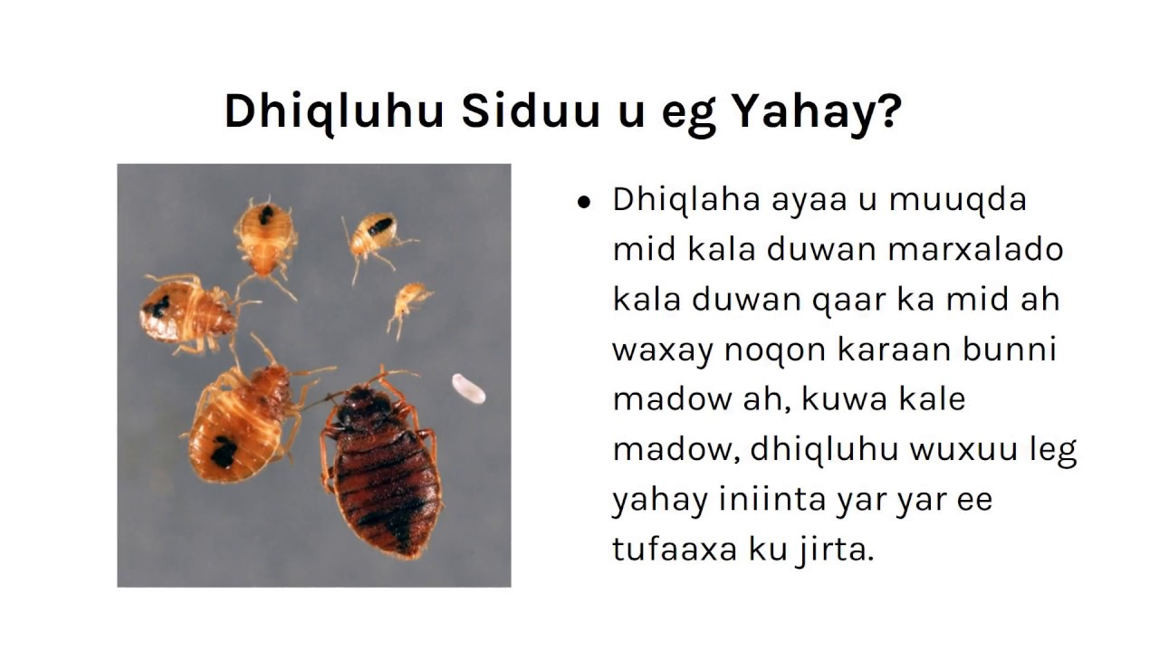 of x educational bug bugs information about photo bed