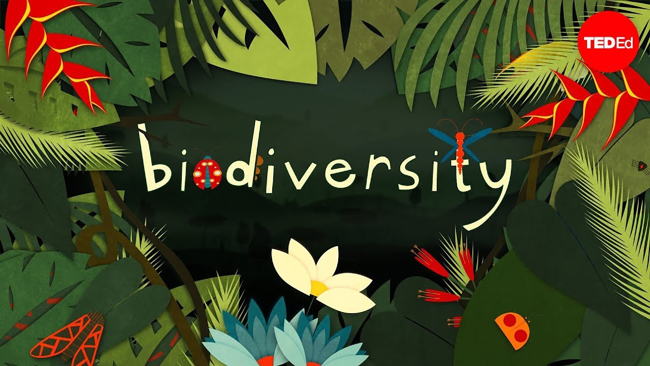 Why Is Biodiversity So Important Kim Preshoff Youtube