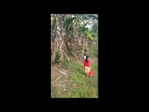 Province Life - Puso ng Saging