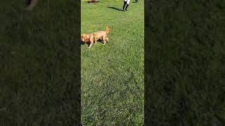 Paw friends at dog park 2