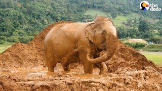 Senior Elephants Rescued After 8 Decades Of Giving Rides | The Dodo