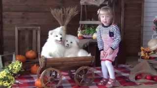 Фотосесссия с щенками самоеда.