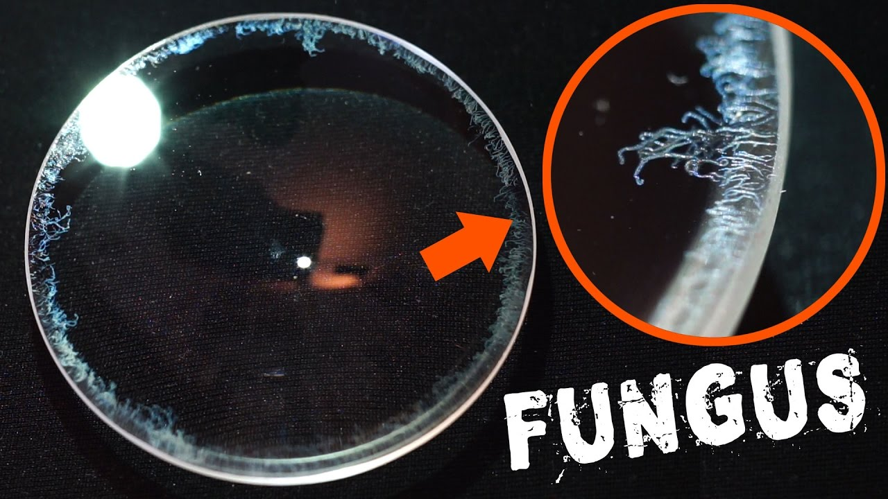 How To Remove Fungus From A Camera Lens Fast Easy Youtube Kit Metal Polish Cream 50 Gr