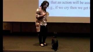 Dog Training In Psychology 101