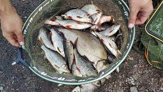 Ловим Ведро Плотвы На Удочку Рыбалка На Поплавок Ловля Сороги
