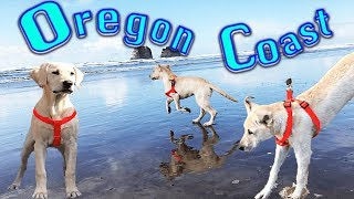 Logan Goes to the Beach! First Vacation and Road Trip! Ocean Fun With His Pack!
