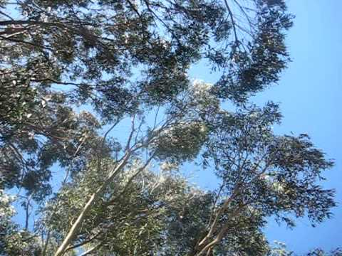 Eucalyptus in Wind and Traffic - Part III