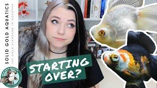 REBUILDING My Fish Room? thumbnail