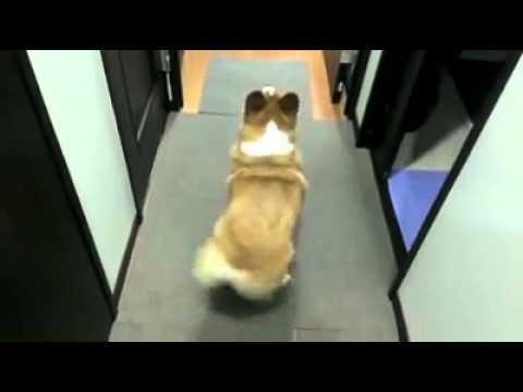 Dog dances to