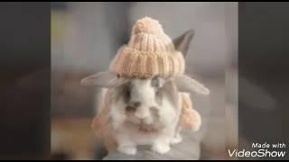 Милые кролики картинки 🐰🐇🐰