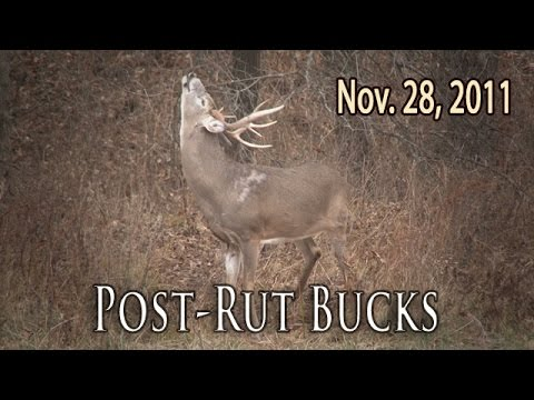 Post Rut Bucks | Midwest Whitetail 2011