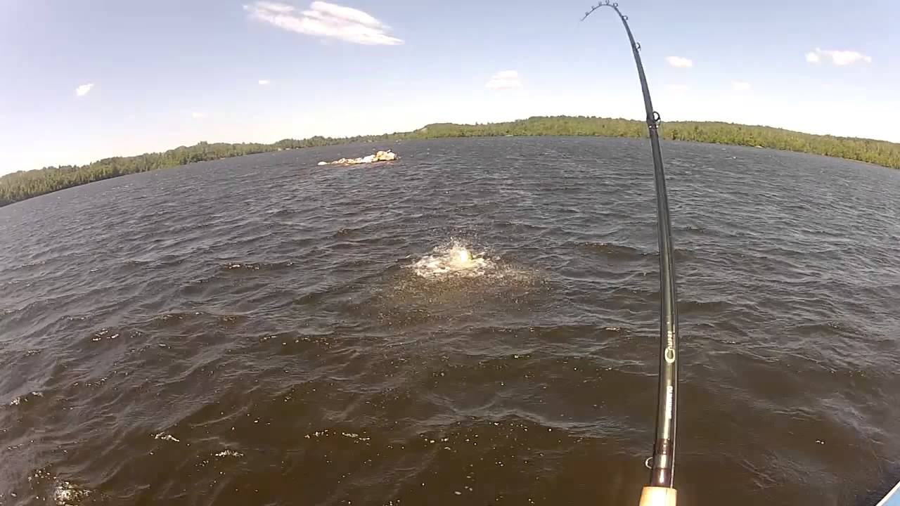 Guy gets stuck by muskie lure on lake vermilion funny for Lake vermilion fishing report