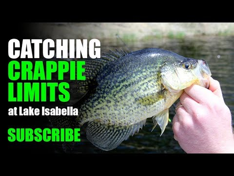 Catching CRAPPIE Limits At Lake Isabella. Reeling Them In Fast.