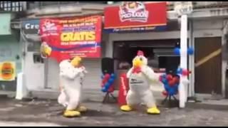 Essas galinhas já não sabem mais o significado da dor