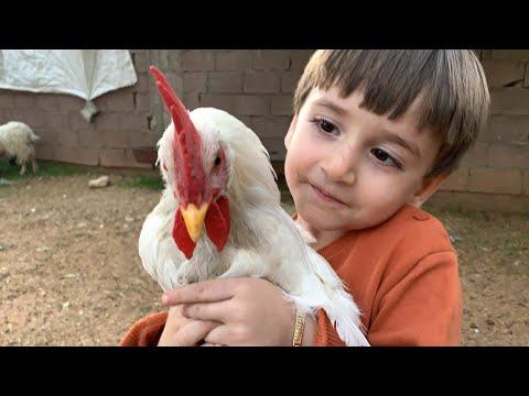 MAHİR'İN HOROZ,İNEK VE KUZUCUK İLE EĞLENCESİ :) (Eğlenceli çocuk Videosu Izle-horoz,kuzucuk,inek :)