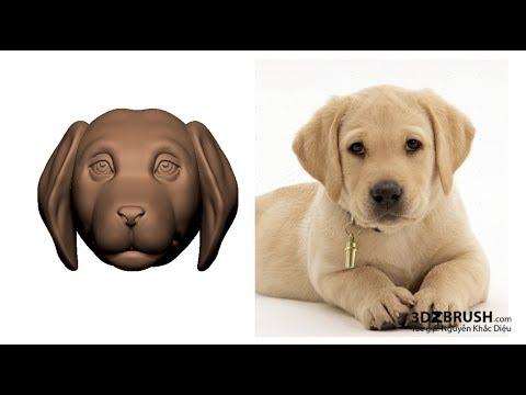 Học zbrush_Năm tuất điêu khắc tượng cún con_Phần 01
