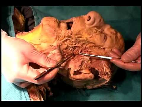 Real anatomy pictures