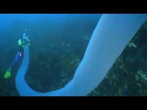 10 самых страшных существ из океанских глубин