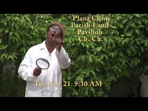 Ministry of Agriculture's Plant Clinic